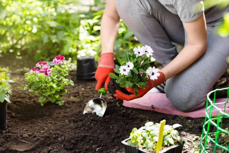 A kertészkedés orvosság